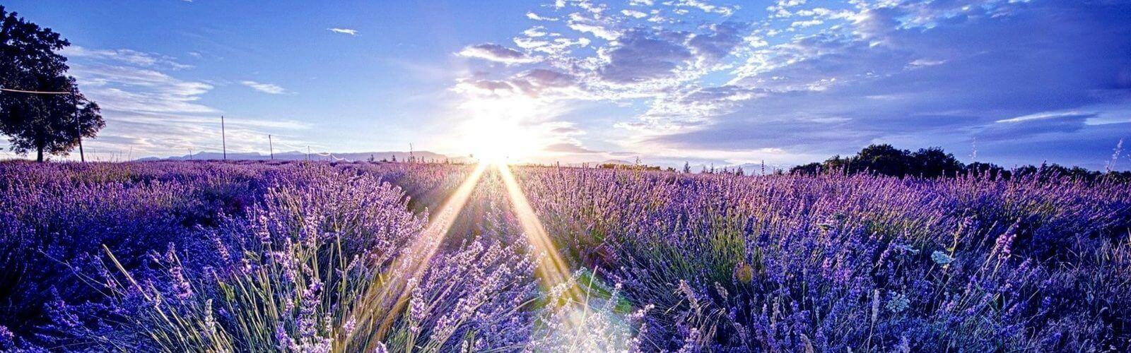 lavender-1-1600x500